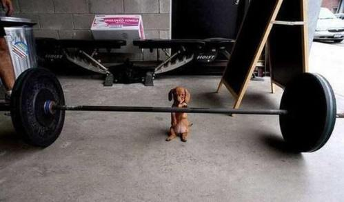cute-dog-lifting-weights